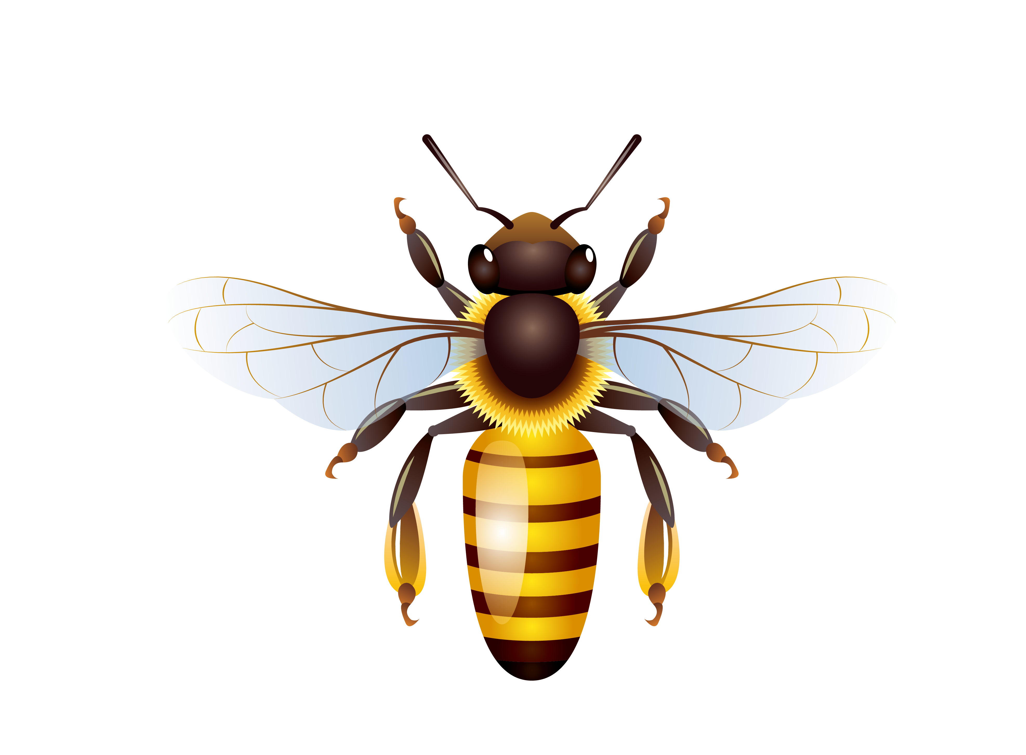 Honey bees png. Bee honeycomb transprent free