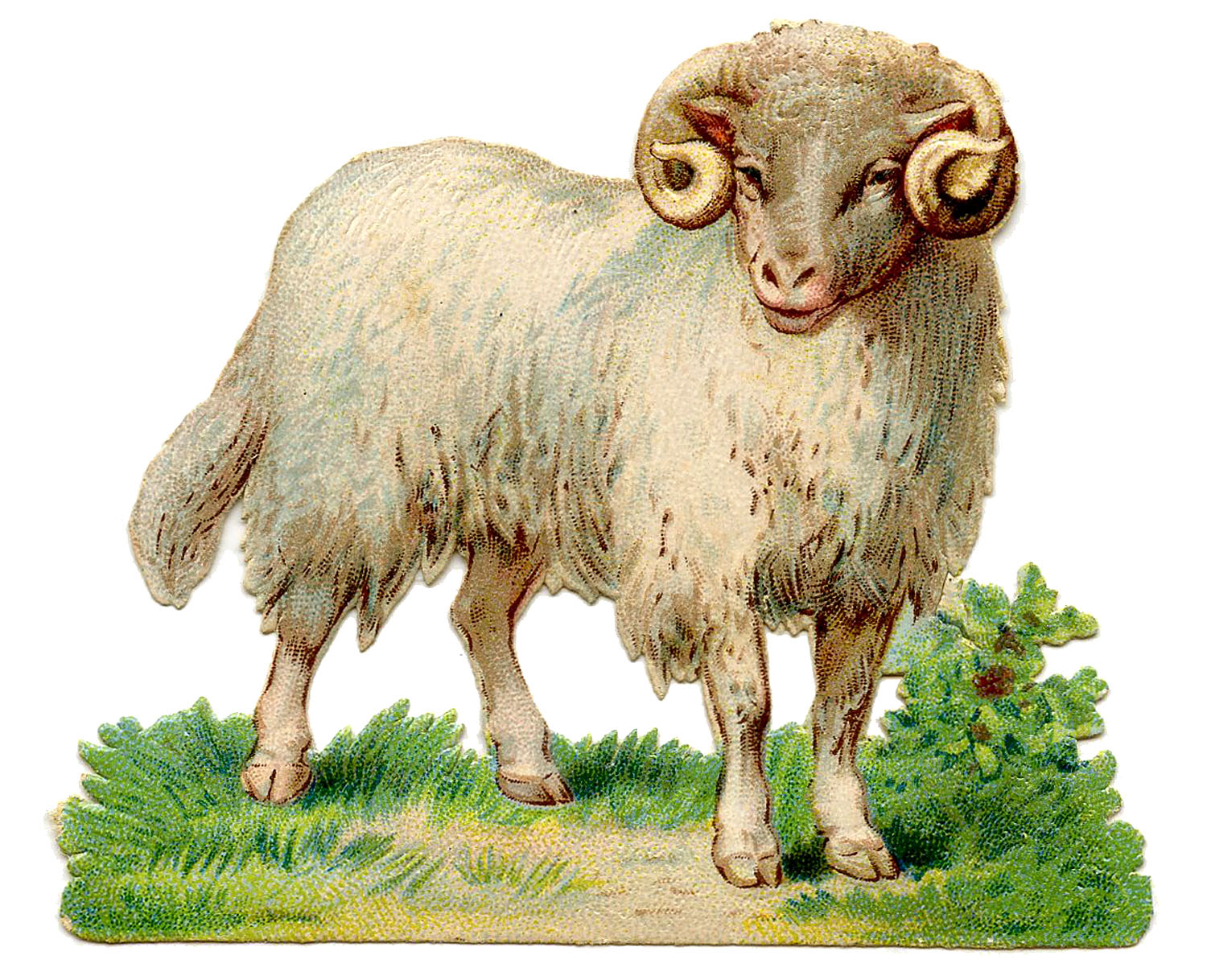 horn clipart sheep horn