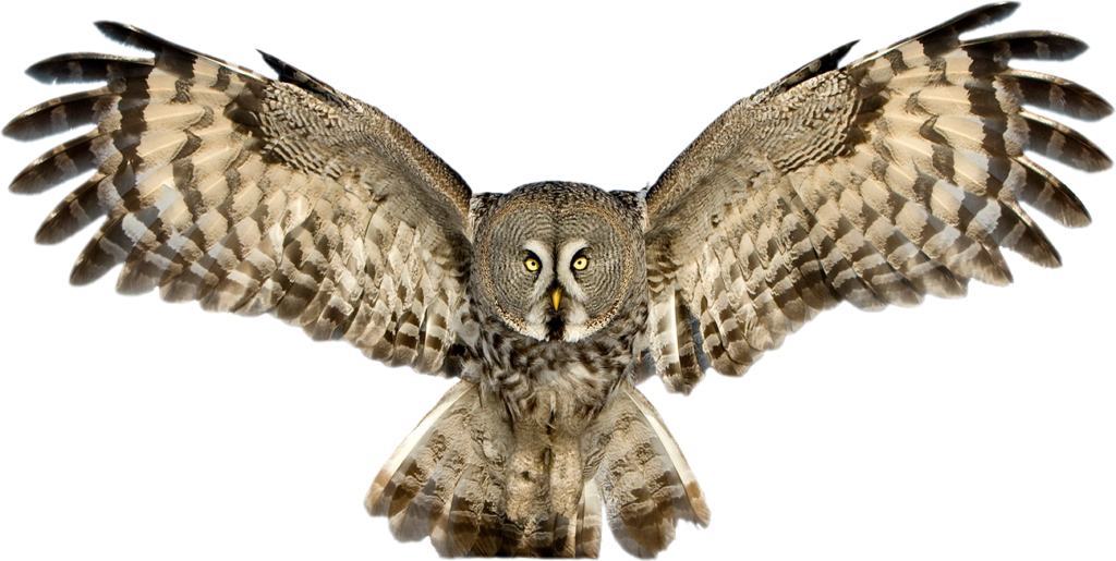 Horned owl png. Pic peoplepng com
