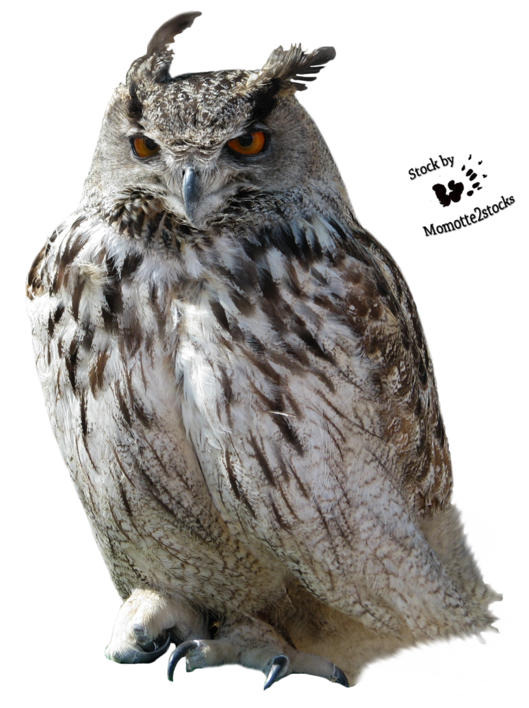 Horned owl png. Hd transparent images pluspng