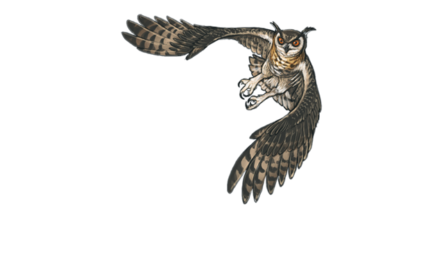 Horned owl png. Encounter guide lioden cape