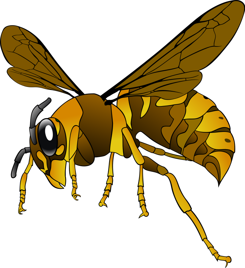 Wasp vector angry cartoon. Free hornet clipart download