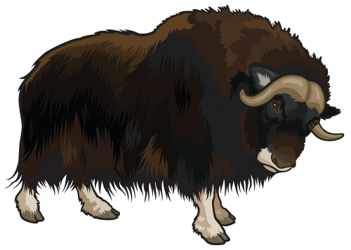 Horns vector bison. Buffalo png clipart animals