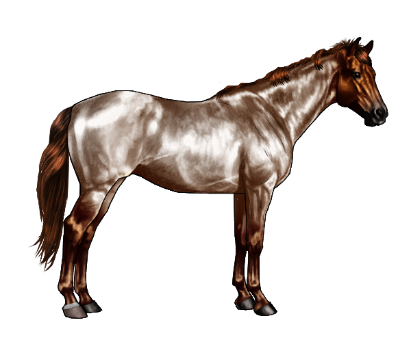 Apache drawing horse
