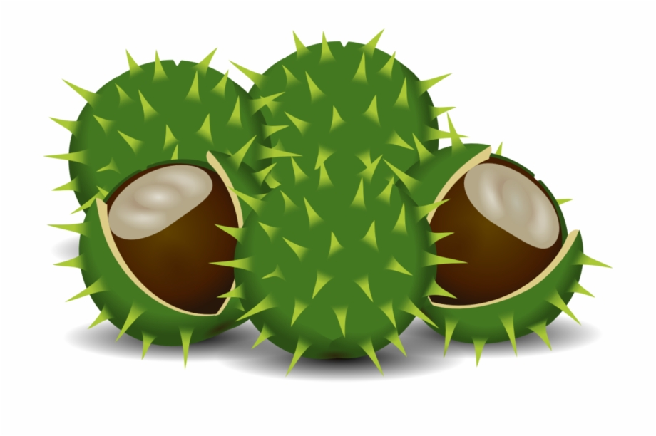 Horse chestnut. European computer icons download
