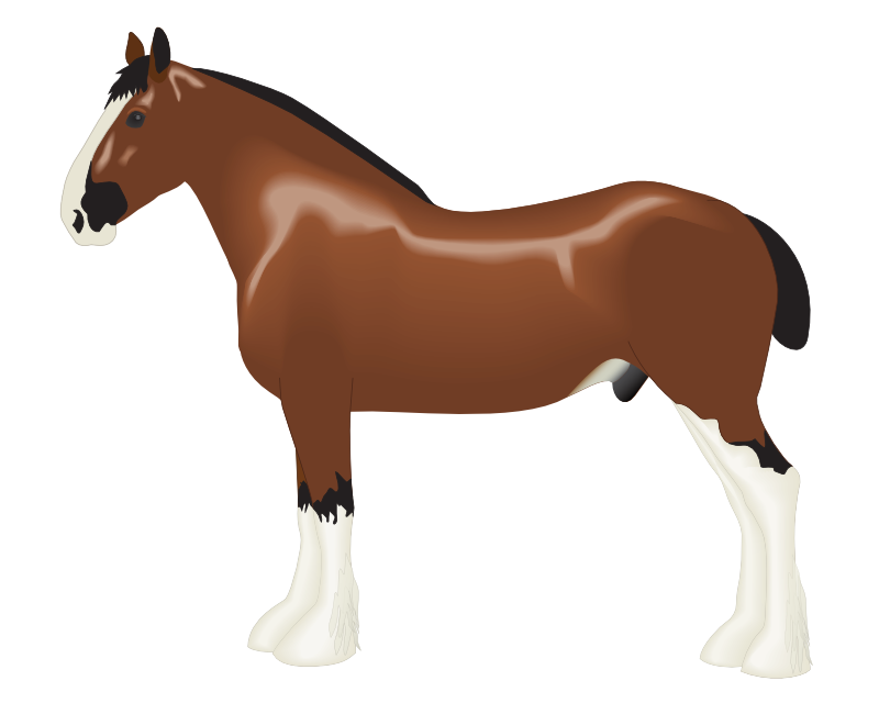 Horse clip art realistic. Free download on cartoon