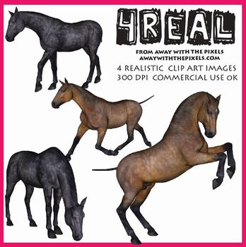 Horse clip art realistic. Real images from