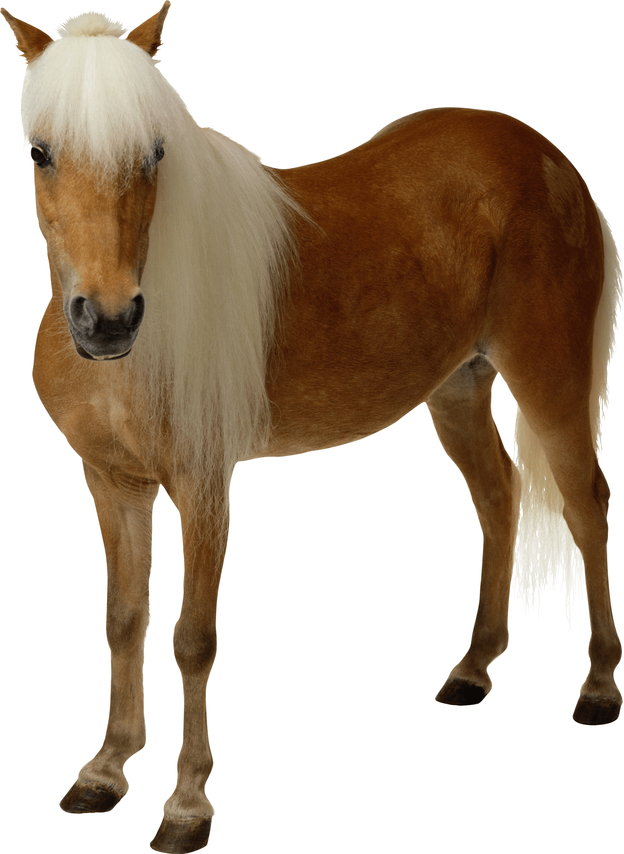 Horse clip art transparent background. Download clipart brown png