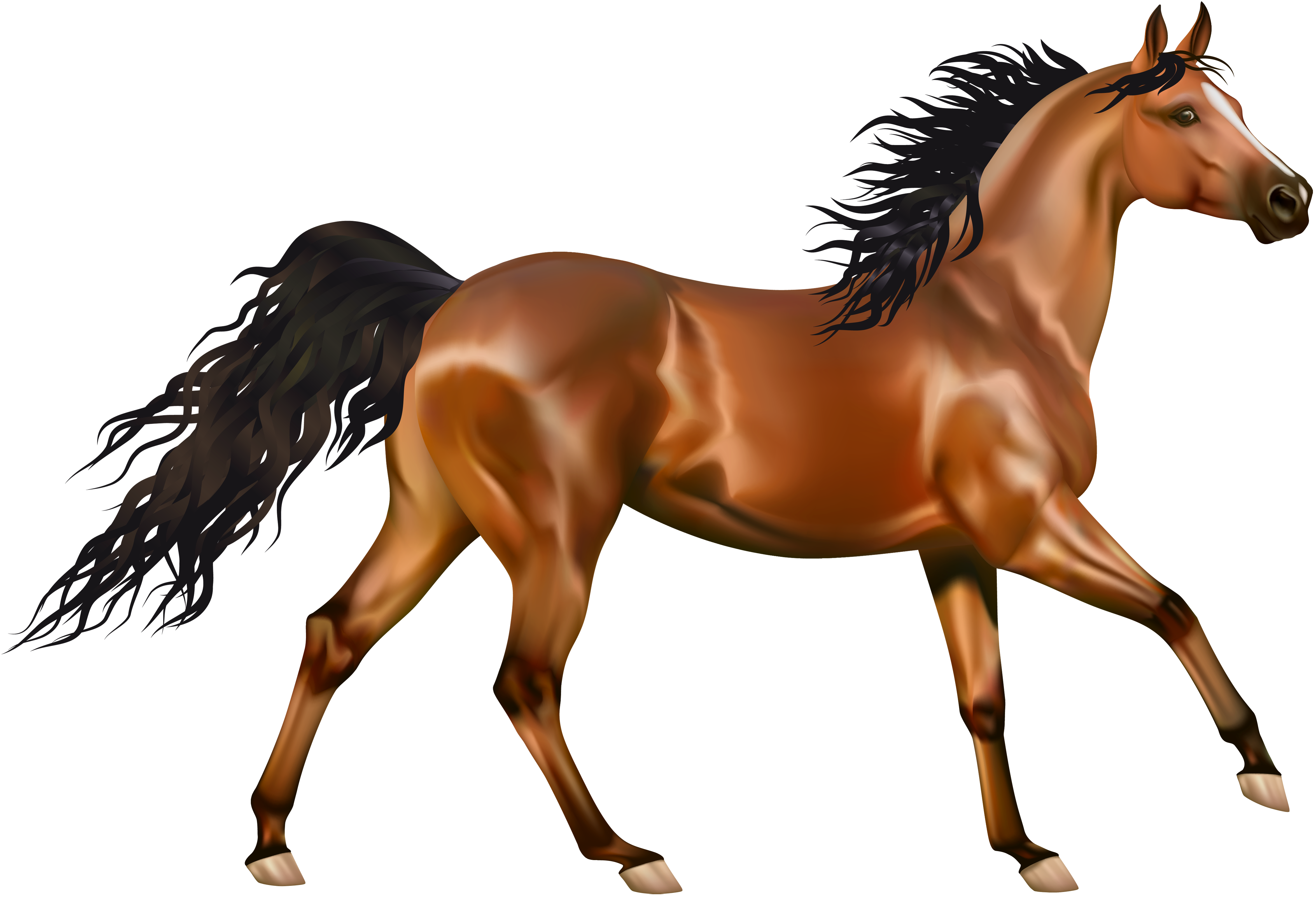 Transparent horses thoroughbred