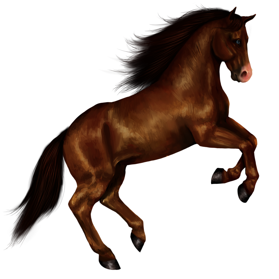 Hq png transparent images. Horse clip art wild horse jpg library library