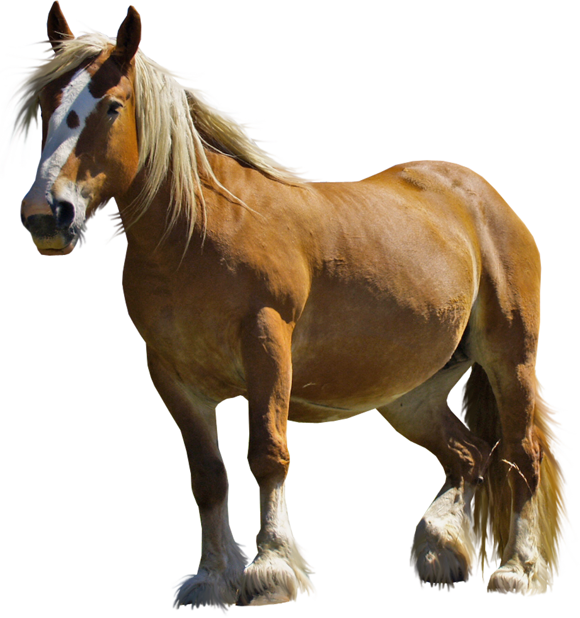 Horse clip real. Brown png clipart gallery