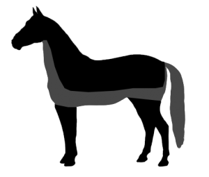 Horse clip trace. Most common types