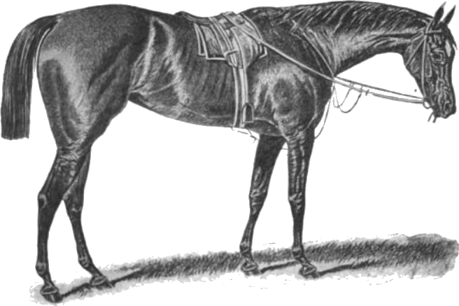 Horse .png. File apology png wikipedia