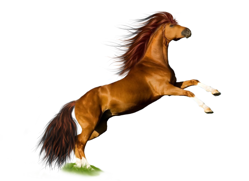 Image free download picture. Wild horse png picture library library