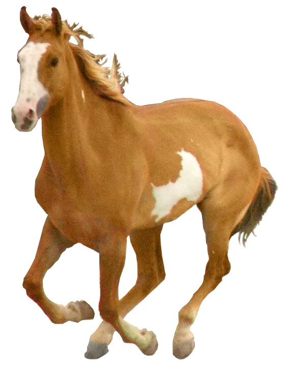 Horse png legs up. Transparent pictures free icons