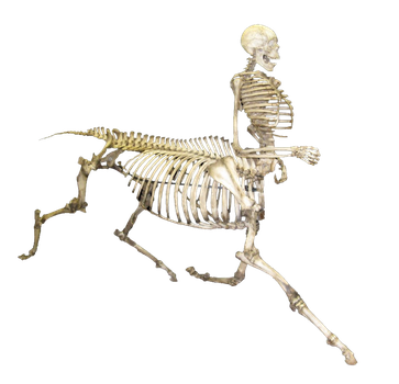Horse skeleton png. Human free icons and