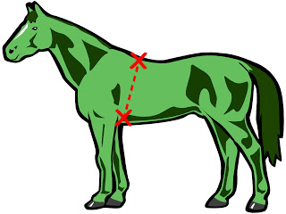 Horse withers. A green is natural