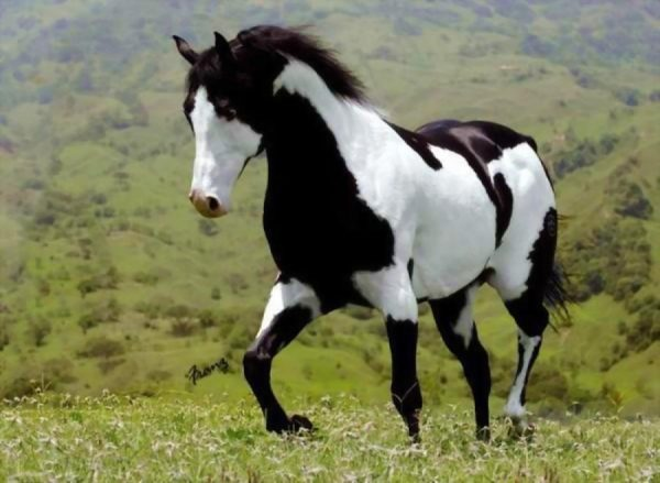 Horse withers. Full information and png