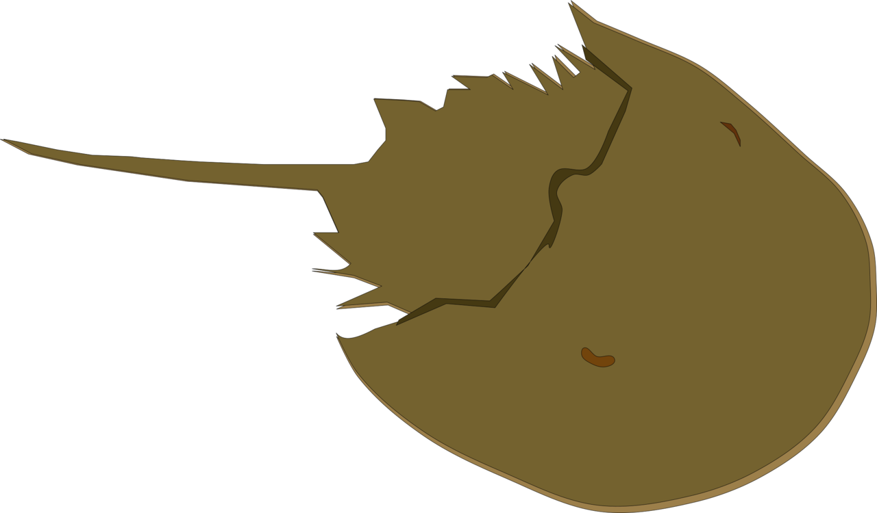Horseshoe crab png. Drawing animal free commercial