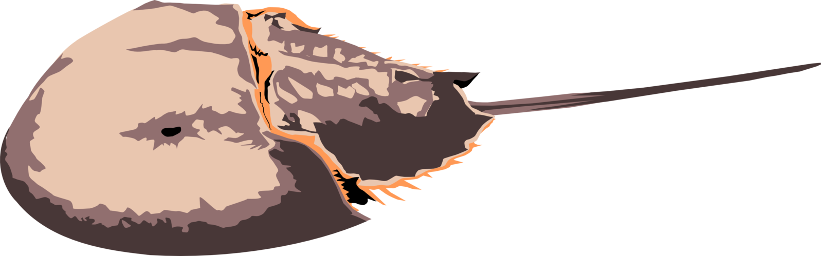 Horseshoe crab png. By michell vall on