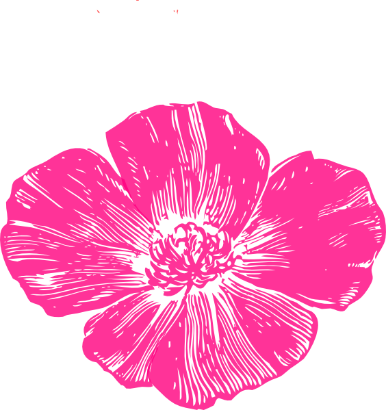 Hot pink flower png. Poppy clip art at