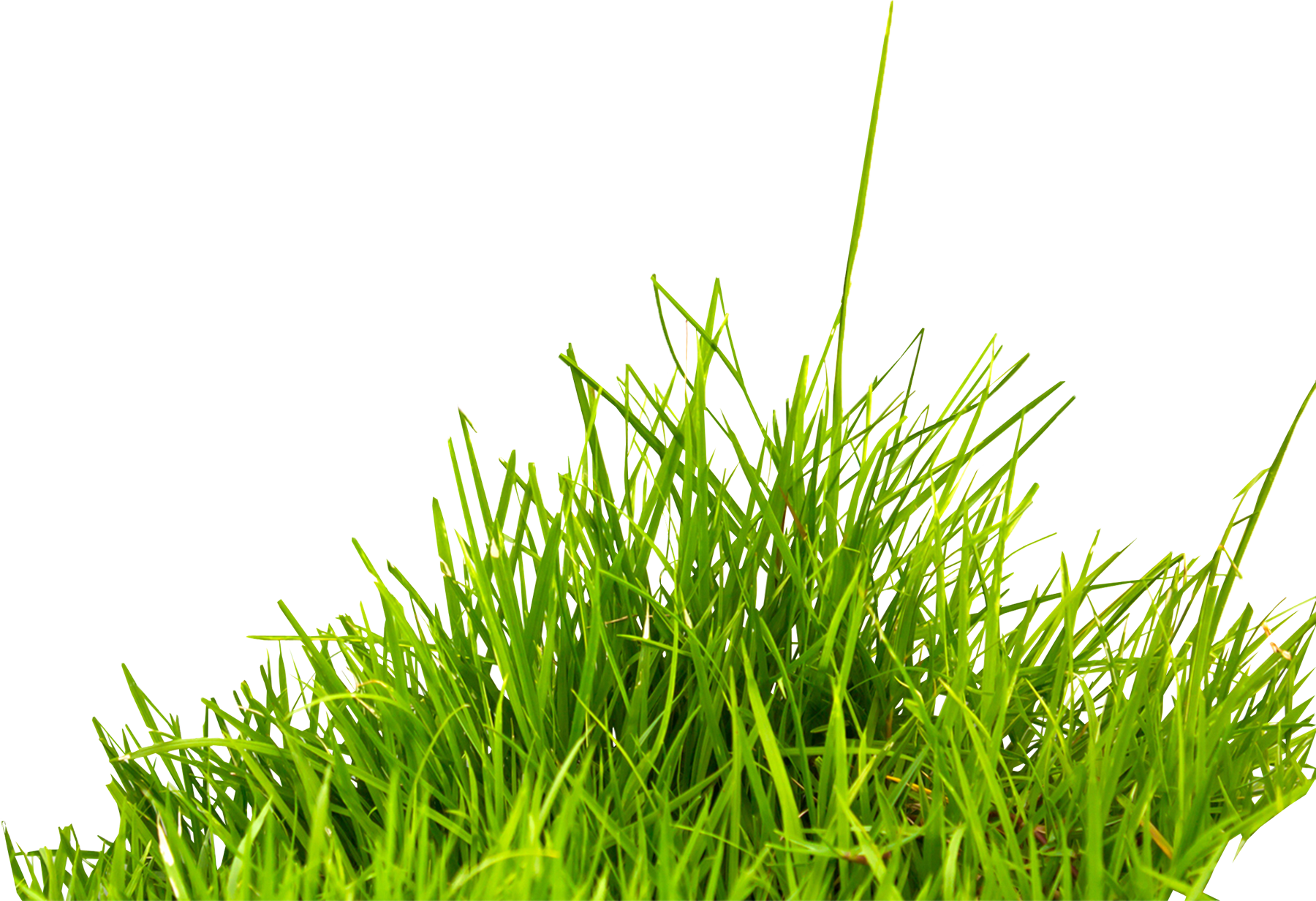 grass overlay png