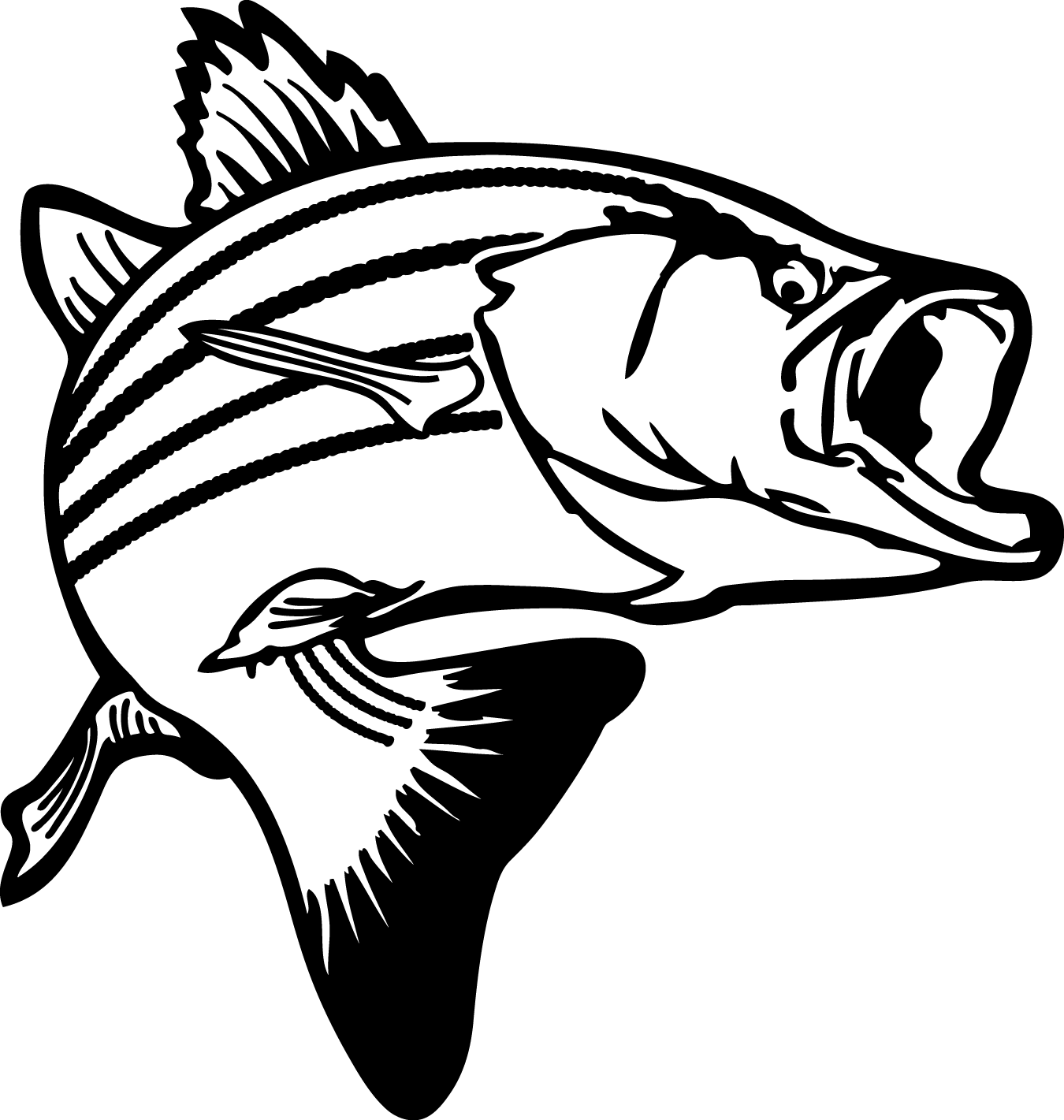 Snook drawing. Free striped bass cliparts