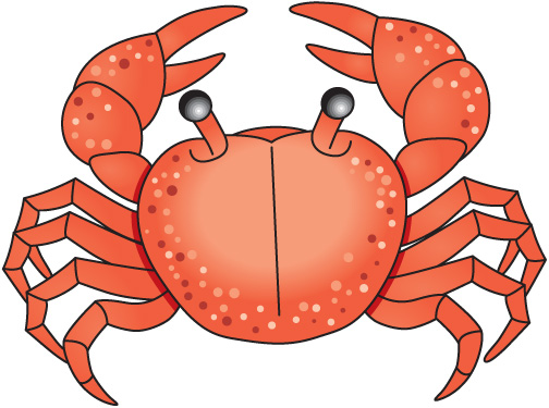 How to clipart crab clipart. Sea