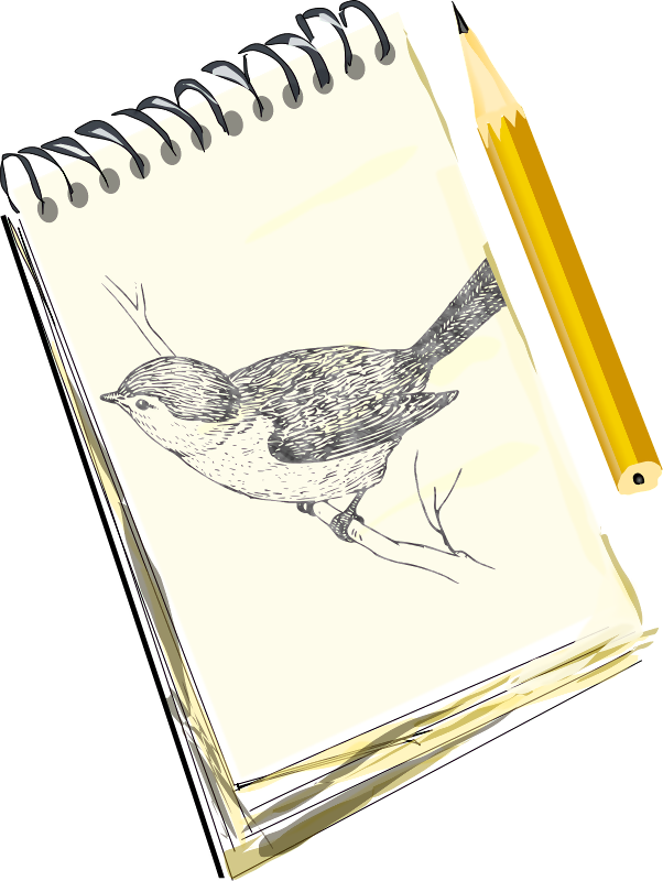 Html drawing sketch. A board with bird
