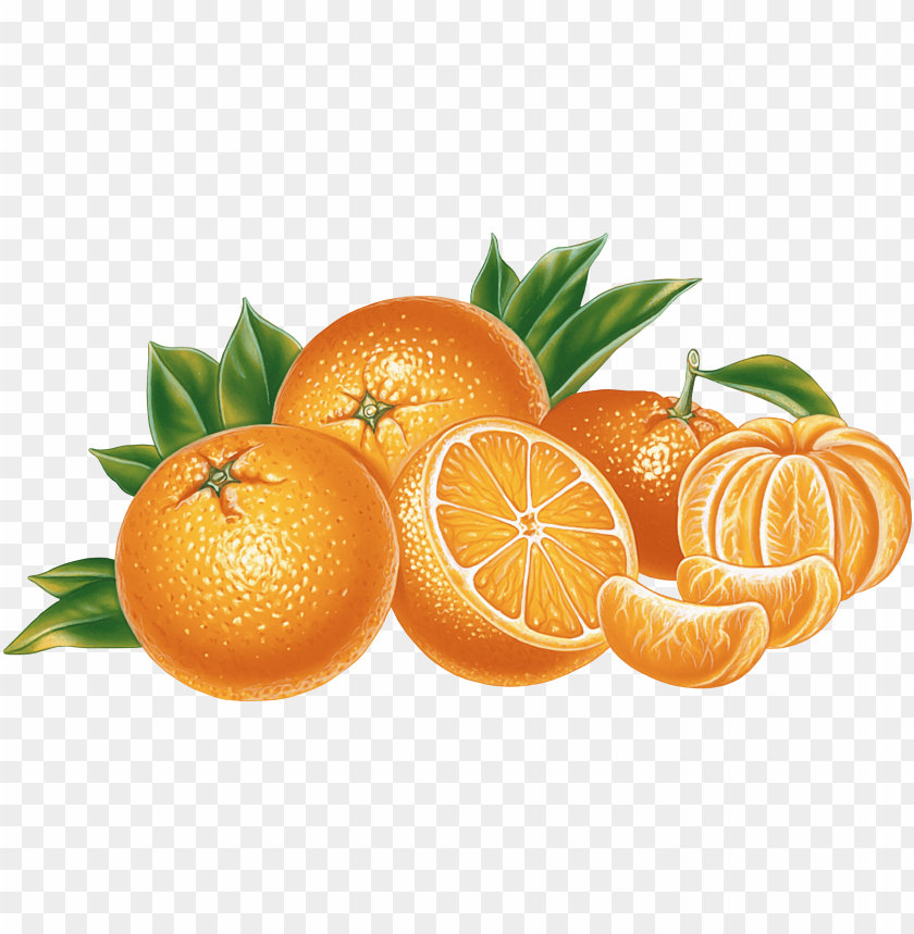 Medium mandarin. Download orange and clipart