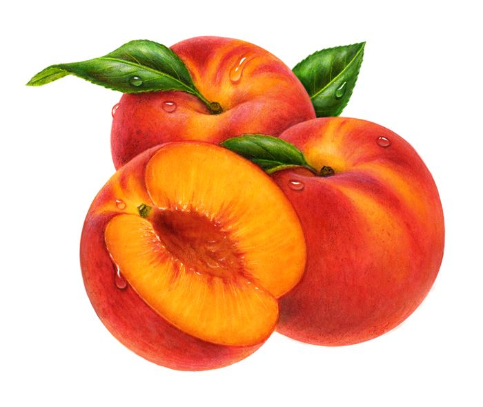 Big peach. Free so cliparts download
