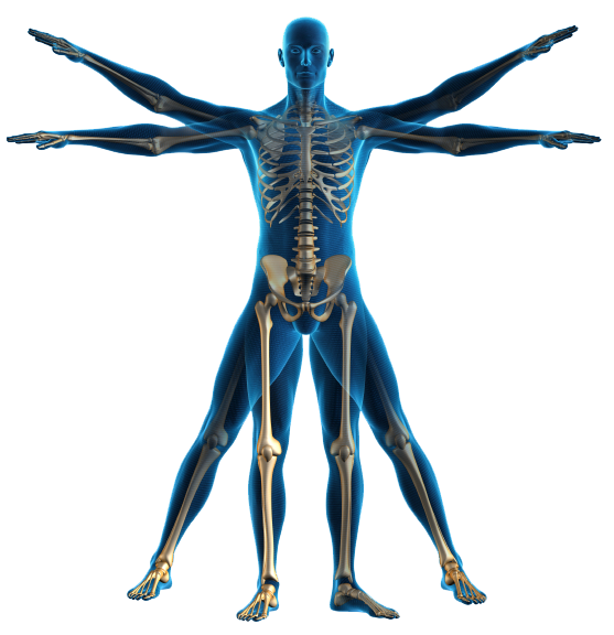 Human body outline png. Clipart at getdrawings com