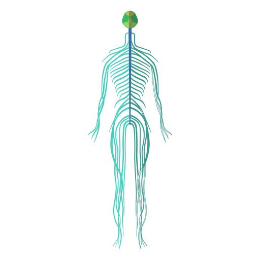 anatomy vector skeletal system