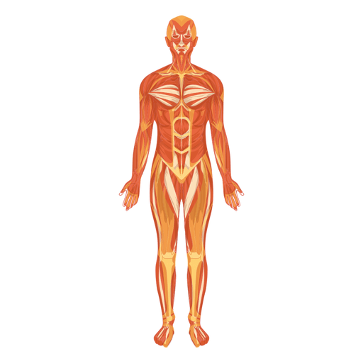 anatomy vector body