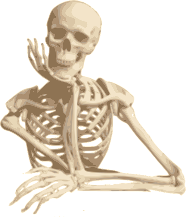 Human bone png. Skeleton skulls images free