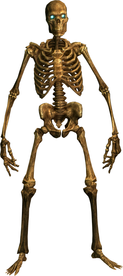 Human bone png. Skeleton transparentpng image information