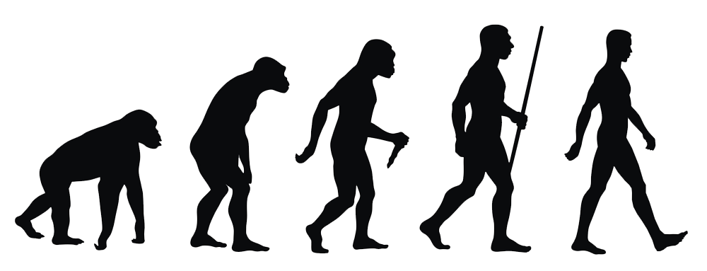 Human evolution png. Benefits of meat and