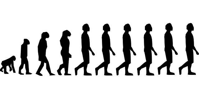 Human evolution png. The future of people