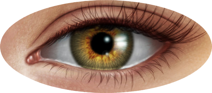 Human eye image mart. Eyes l png svg library stock