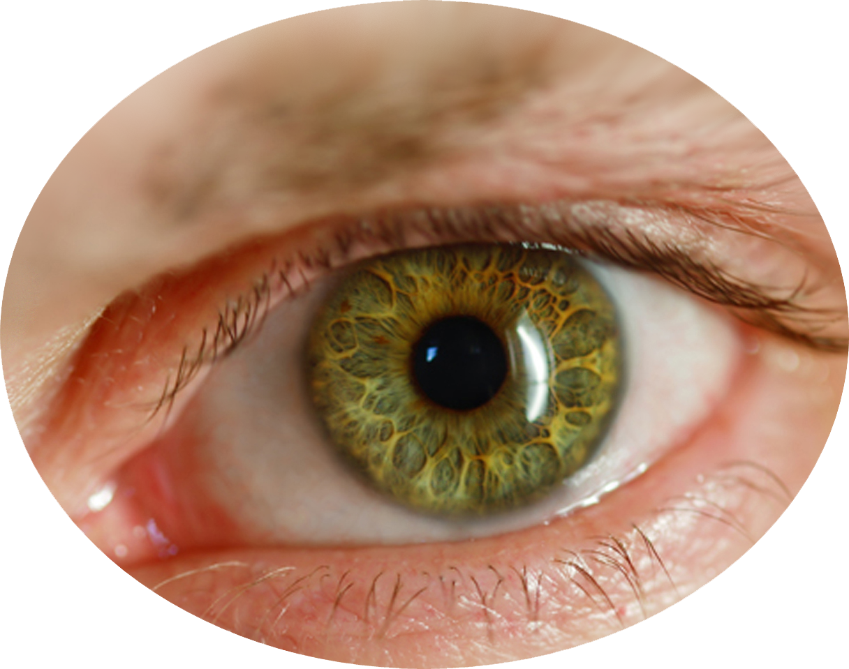 Human eye png. File mart