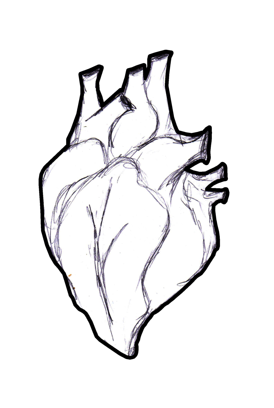 Human heart drawing png. Real at getdrawings com