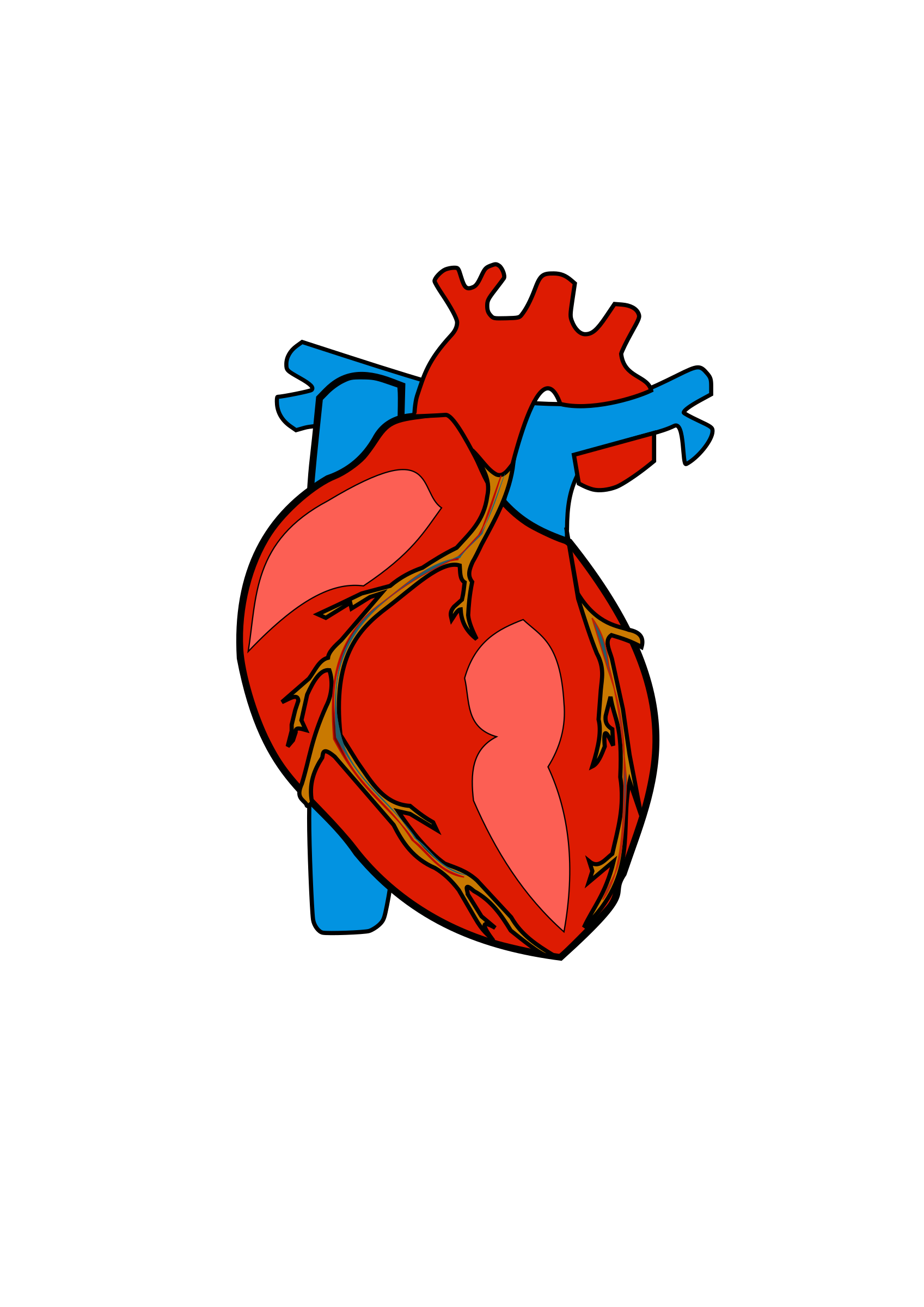 Human heart png. Icons free and downloads