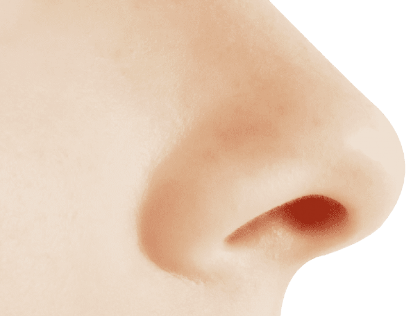 Human nose png. Free images toppng transparent