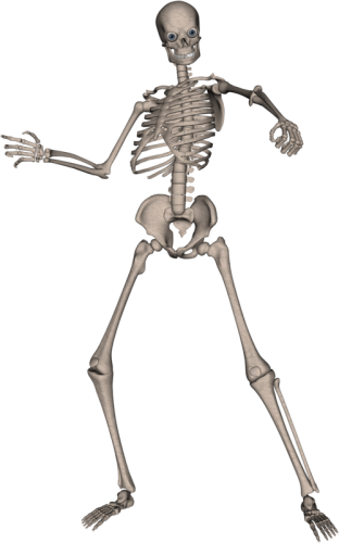 Human skeleton png. Eight isolated stock photo