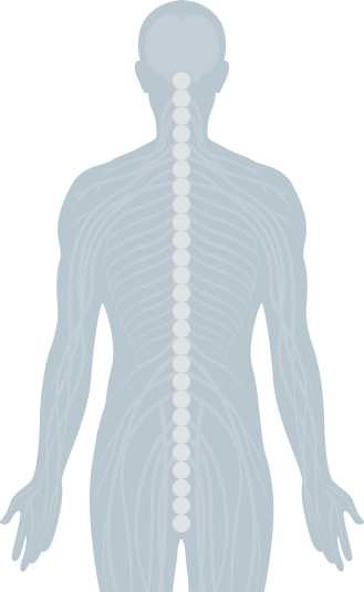 Chiropractic spine png. Interactive the joint human