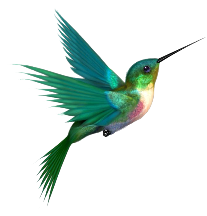 habitat drawing hummingbird