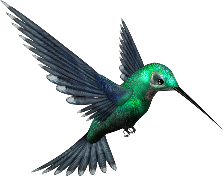 Hummingbird transparent. Green humming bird png