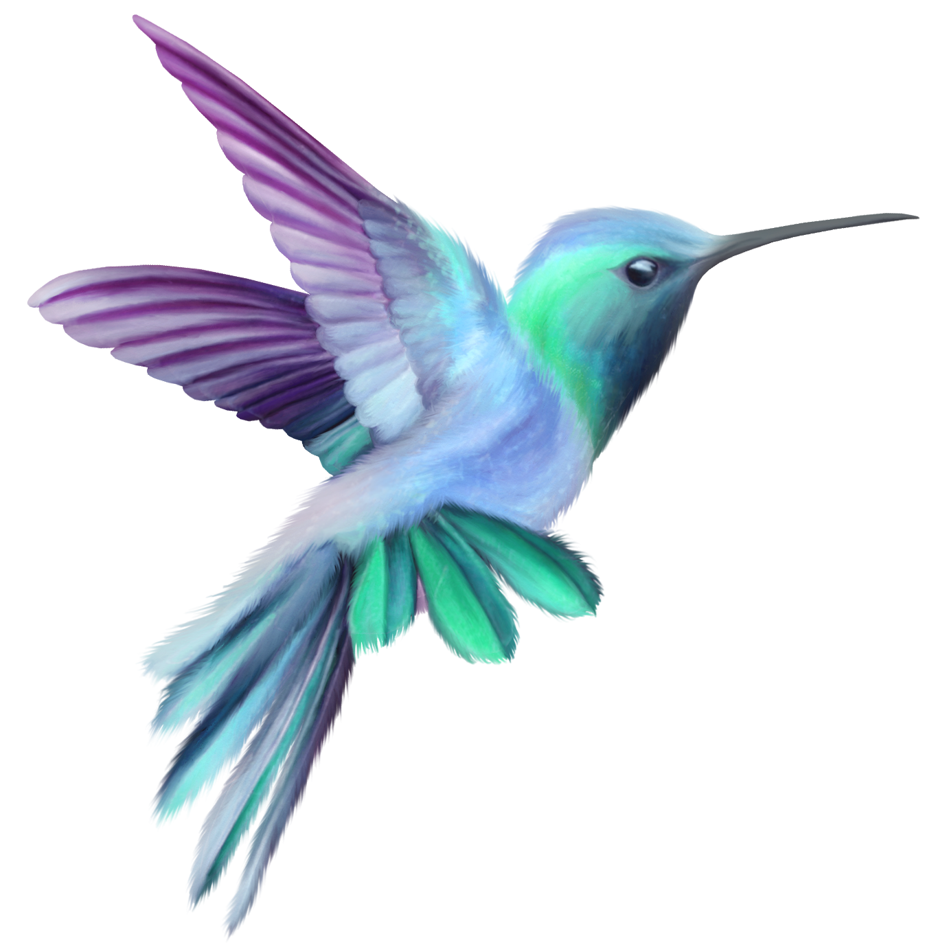 Clip art image gallery. Hummingbird transparent clipart black and white