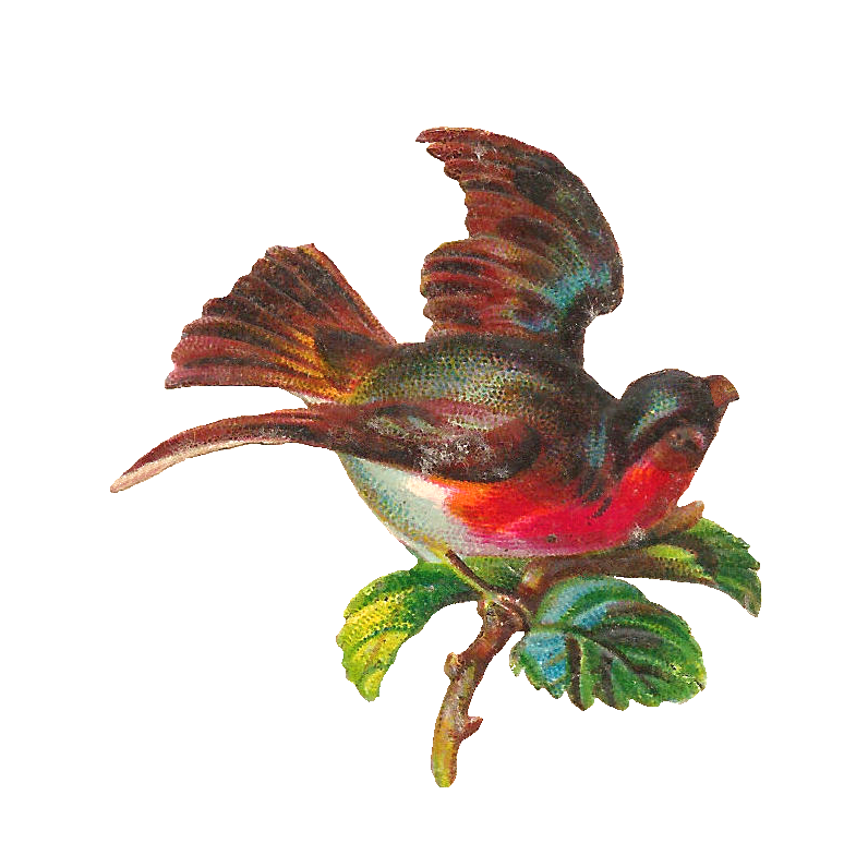 Hummingbird clipart embroidery digitizing. Clip art free
