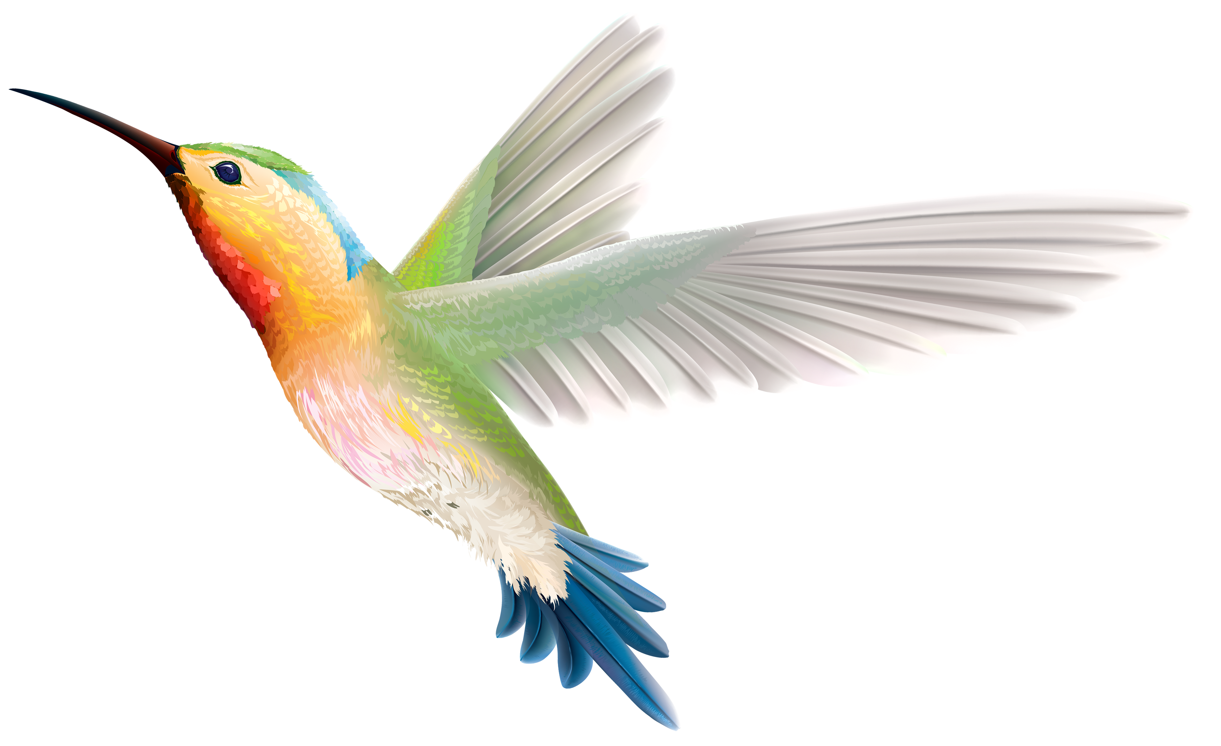 Png clipart best web. Hummingbird transparent clipart freeuse library